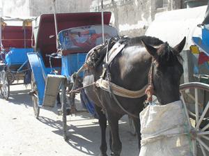 Pferde-Taxi