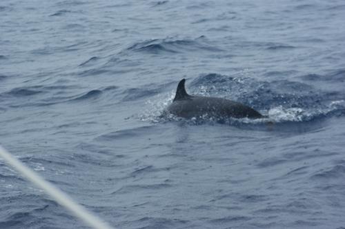 delfine.jpg