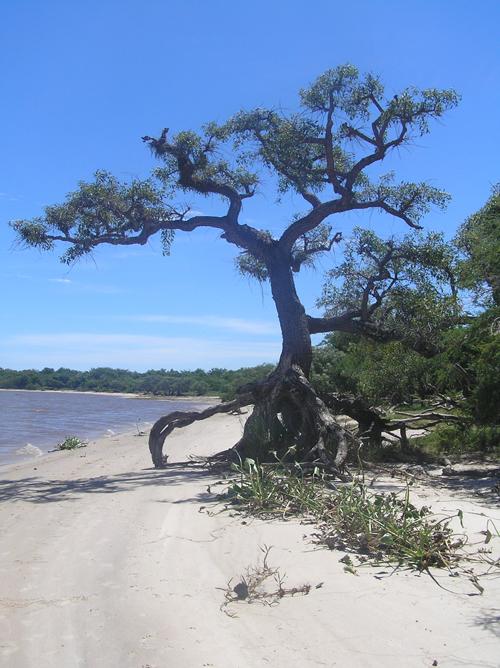 strand-rio-negro.jpg